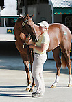 September 08, 2014:Hip #610 Candy Ride - Ellesmere filly consigned by Lane's End at the Keeneland September Yearling Sale.   Candice Chavez/ESW/CSM