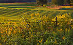 The early morning sun warms a farmer's field in northern Wisconsin.