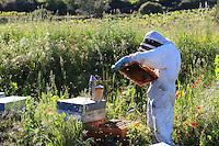 The smoker is the beekeepers' tool par excellence. It calms the bees, distracting their attention by creating a fire alert.///L'enfumoir est l'outil par excellence des apiculteurs, il permet de calmer les abeilles en détournant leur attention par une alerte au feu.