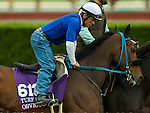 ARCADIA, CA - NOV 01: Obviously, owned by Anthony Fanticola & Joseph Scardino and trained by Philip D'Amato, exercises in preparation for the Breeders' Cup Mile **ENTERED IN MULTIPLE RACES**at Santa Anita Park on November 1, 2016 in Arcadia, California. (Photo by Kazushi Ishida/Eclipse Sportswire/Breeders Cup)