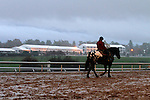 October 28, 2015:  Rainy morning at Keeneland just days before the Breeder's Cup.  Candice Chavez/ESW/CSM