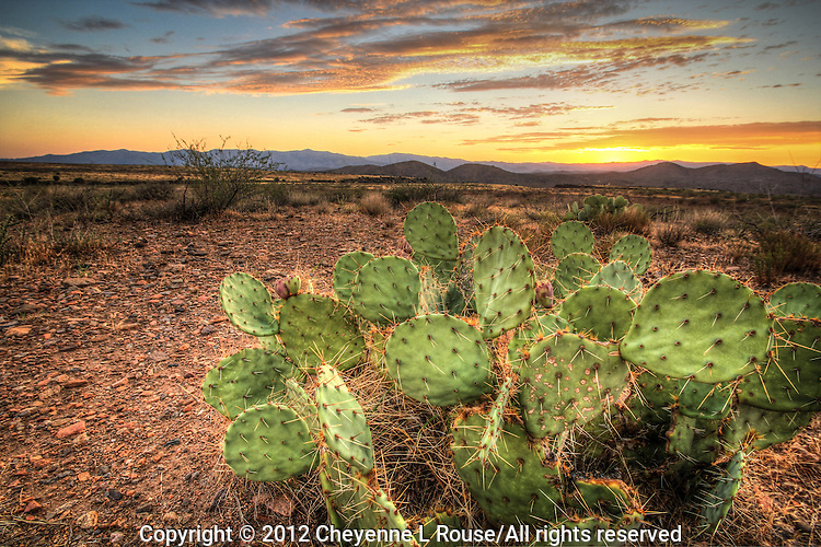 Pastel Prickly Pear Sunset - Arizona