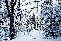 WT09-001a  Forest - winter