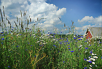 SE - Smaland<br /> Flowering summer meadow nearby Gränna<br /> <br /> Full size: 68,1 MB