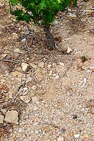 Domaine la Tour Vieille. Collioure. Roussillon. Terroir soil. The vineyard. France. Europe. Vineyard. Schist slate soil.