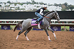 DEL MAR, CA - NOVEMBER 02: Significant Form, owned by Stephanie Seymour Brant and trained by Chad C. Brown, exercises in preparation for Breeders' Cup Juvenile Fillies Turf during morning workouts at Del Mar Thoroughbred Club on November 2, 2017 in Del Mar, California. (Photo by Michael McInally/Eclipse Sportswire/Breeders Cup)