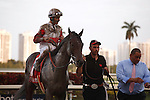 Orbwith jockey John Velazquez up after winning the Fountain of Youth (G2) at Gulfstream Park. Hallandale Beach Florida. 02-23-2013