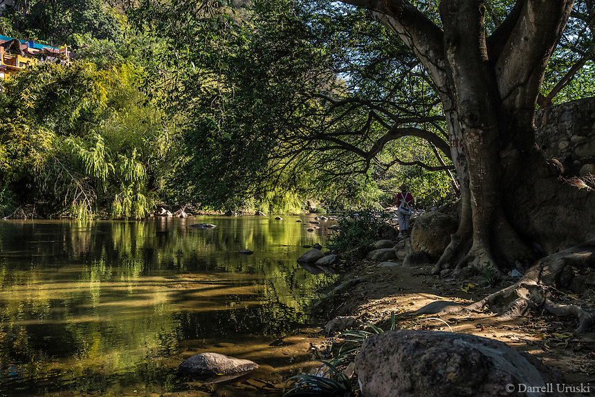 Fine Art Landscape Photograph. While exploring the Cuale River in Puerto Vallarta I was able to find this beautiful and tranquil scene. Rarely is the lighting this nice. The lighting during these moments doesn't last for very long, but in the end I was able to capture this amazing tree with it's large trunk and it's strong root system. I really liked the beautiful morning reflections of the foliage shimmering on the Rio Cuale in Puerto Vallarta Mexico.