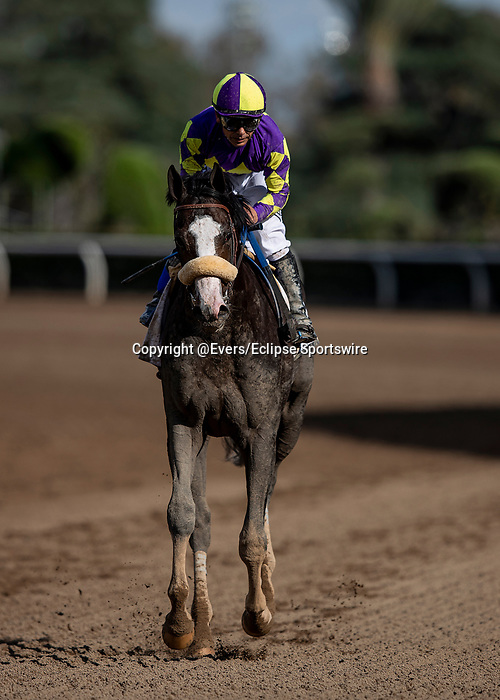 MAR 07: Honor Ap and Mike Smith after the San Felipe Stakes at Santa Anita Park in Arcadia, California on March 7, 2020. Evers/Eclipse Sportswire/CSM