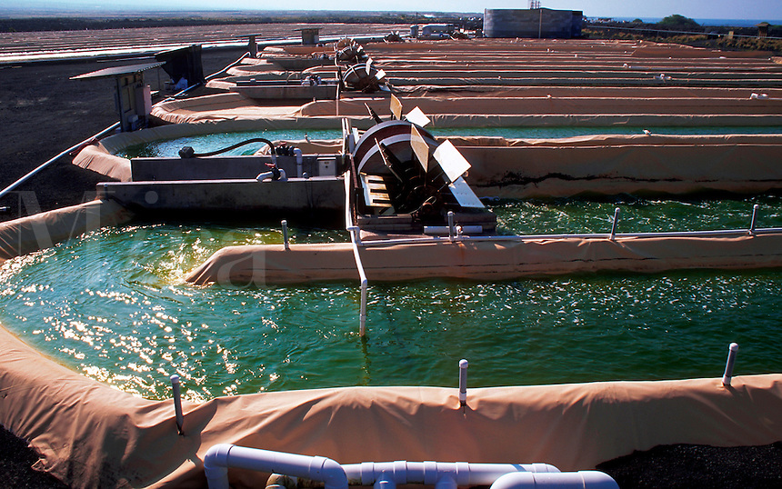Artificial ponds cultivating Astaxanthin algae..