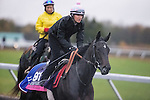 October 28, 2015:  Nemoralia, trained by Jeremy Noseda and owned by T. Allan , J. Lovat  & C. Pigram, exercises in preparation for the Breeders' Cup Juvenile Fillies Turf at Keeneland Race Track in Lexington, Kentucky on October 28, 2015. Jon Durr/ESW/CSM