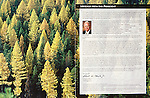 Nelson Kenter photo of a larch and pine forest in autumn. Used in an annual report two page spread