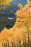 fall, color, autumn, aspen, Populus tremuloides, on Bierstadt Moraine, Sprague Lake, morning, trees, forest, mountains, landscape, scenic, Rocky Mountain National Park, Colorado, Rocky Mountains, USA