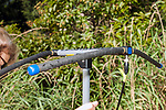 Radio antenae used in tracking Wood turtles in collaborative project between MassWildlife and Zoo New England.