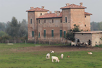 - medieval castle in the agricultural company Spigaroli....- castello medievale nell' azienda agricola Spigaroli