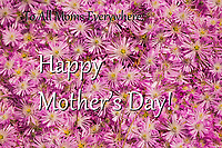 Happy Mother's Day text over a bed of flowers with pink and white petals and yellow centers, bursting with spring.