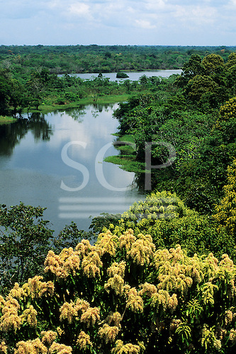 Ariau, Amazon, Brazil. View over the canopy of the rainforest with trees in flower and a tributary of the Rio Negro.