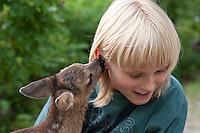 Rehkitz, Reh-Kitz, verwaistes, pflegebedürftiges Jungtier wird in menschlicher Obhut großgezogen, Kind, Junge mit Kitz im Garten, Kitz nuckelt, saugt und leckt am Ohr des Kindes, Tierkind, Tierbaby, Tierbabies, Europäisches Reh, Ricke, Weibchen, Capreolus capreolus, Roe Deer, Chevreuil