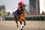 FUCHU,JAPAN-FEB 21: Red le Zele  (4th) is post parading before the February Stakes at Tokyo Racecourse on February 21,2021 in Fuchu,Tokyo,Japan. Kaz Ishida/Eclipse Sportswire/CSM