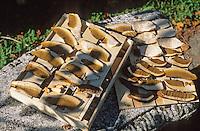 Europe/France/Limousin/19/Corrèze/Chaumeil: Cèpes séchant chez Marcelle Ségurel de l'auberge des Bruyères