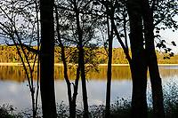 GERMANY, Plau, forest / DEUTSCHLAND, Plau, See und Wald
