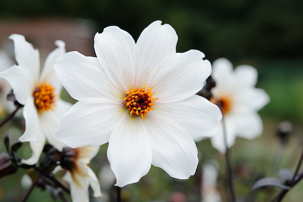 Flowers - Toby Buckland - Shoot 08 (12th October 2010)