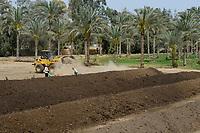 EGYPT, Bilbeis, Sekem organic farm, preparing of organic compost for desert farming / AEGYPTEN, Bilbeis, Sekem Biofarm Herstellung von Kompost fuer Landwirtschaft in der Wueste