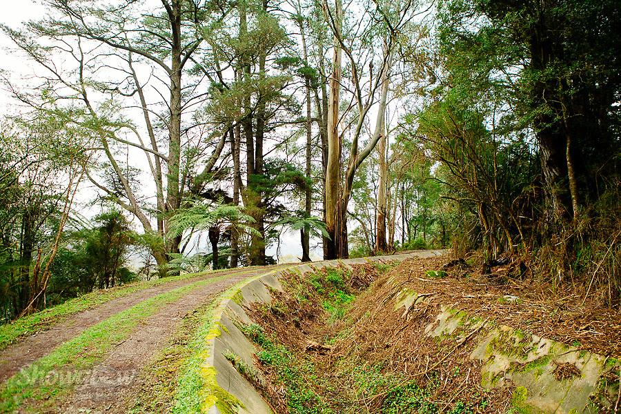 Image Ref: YV296<br /> Location: O'Shannassy Aqueduct Trail<br /> Date: 26.08.18