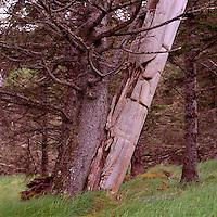 Skedans (National Heritage Site), Haida Gwaii (Queen Charlotte Islands), Northern BC, British Columbia, Canada - Historic Haida Mortuary Totem Pole on Louise Island, Gwaii Haanas National Park Reserve and Haida Heritage Site