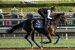 ARCADIA, CA  OCTOBER 30: Breeders' Cup Juvenile  entrant Eight Rings, trained by Bob Baffert,  exercises in preparation for the Breeders' Cup World Championships at Santa Anita Park in Arcadia, California on October 30, 2019. (Photo by Casey Phillips/Eclipse Sportswire/CSM)
