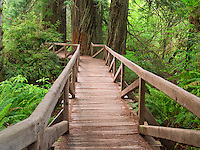 Bridge over creek in Redwood National and State Parks, California