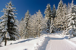 Oesterreich, Salzburger Land, Winterlandschaft | Austria, Salzburger Land, Winter Scenery