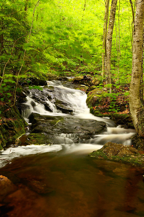 Wet weather invigorates a mountain stream hidden in the woods of Sandwich Notch Rd.