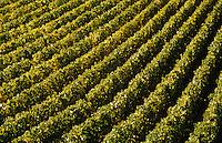 Europe/France/89/Yonne/AOC Chablis: Le vignoble de Chablis