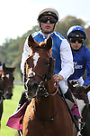 October 02, 2016, Chantilly, FRANCE - Left Hand with Maxime Guyon up at the Qatar Prix de'l Arc de Triomphe (Gr. I) at  Chantilly Race Course  [Copyright (c) Sandra Scherning/Eclipse Sportswire)