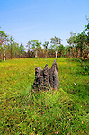 Magnetic Termite Mound, Litchfield National Park, Northern Territory