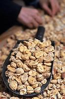 Europe/France/Corse/2A/Corse-du-Sud/Cuttoli-Corticchiato: Chez Mr Pierlovisi castanéiculteur tri des chataignes au sortir du four avant préparer la farine de chataignes
