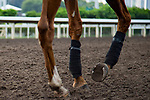 SHA TIN,HONG KONG-MAY 03: Stormy Antarctic,trained by Ed Walker,shows shoe plate in prepares for the Champions Mile at Sha Tin Racecourse on May 3,2017 in Sha Tin,New Territories,Hong Kong (Photo by Kaz Ishida/Eclipse Sportswire/Getty Images)