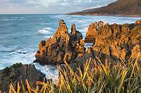 Pancake Rocks, limestone formations in Punakaiki at sunset, Paparoa National Park, West Coast, Buller Region, New Zealand, NZ