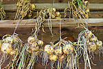 Italy, South Tyrol, Alto Adige, onions hanging to dry