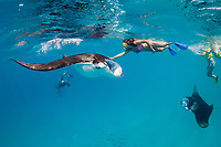 snorkeler touching reef manta ray, Mobula alfredi, while guide photographs her with her own camera, Hanifaru Bay, Hanifaru Lagoon, Baa Atoll, Maldives, Indian Ocean
