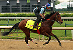LOUISVILLE, KY - APRIL 23: Discreetness (Discreet Cat x Fondness, by Elusive Quality) gallops on the track at Churchill Downs in preparation for the Kentucky Derby. Owner Xpress Throughbreds LLC, trainer William H. Fires (Photo by Mary M. Meek/Eclipse Sportswire/Getty Images)
