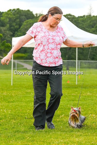 Silver Falls Kennel Club Fun Match