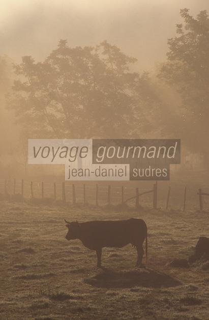 Europe/France/Limousin/19/Corrèze/Vallée de la Dordogne/Env Argentat: Brume matinale et vaches en pâturage élevage vaches race limousine