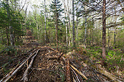 Skidder Road from the Kanc 7 Timber Harvest project in the area of Forest Road 37A along the Kancamagus Scenic Byway (route 112) in the White Mountains, New Hampshire.