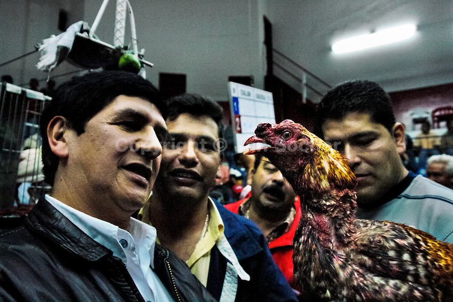 Colombian men inspect fighting cock's injuries after a very tough match in Gallera San Miguel, Bogotá, Colombia, 7 April 2006. Cockfight is a widely popular and legal sporting event in much of Latin America. The fight is usually held in an arena (gallera) with seats for spectators. There is always gambling involved in cockfights. People take advantage of cock's natural, strong will to fight against all males of the same species. Birds are specially bred to increase their aggression and stamina, they are given the best of food and care. The cocks are equipped with tortoise-shell made gaffs tied to the bird's leg. The fight is not intentionally to the death but it may result in the death of cocks very often because birds never stop fighting. They may bleed, they may have punctured lungs, both eyes pecked out but they naturally fight to the death.