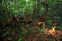 One, two, three trees are harvested in a day. The honey-hunters devour the honey during the harvest as though to pay themselves for the effort expended. At the base of the tree, the honey is shared and the rest is brought back to the camp for the women and children. The brood cell is eaten by the men. It's man's food. ///Honey is important in the Likouala and for the N'Bensele clan and the big season for honey and larvae is in August and September. Then, everyone is in the forest and and no one is left in the village.Un, deux, trois arbres sont récoltés en une journée. Les chasseurs dévorent le miel pendant la récolte comme pour se payer de l'effort accomplie. En bas, le miel est partagé et le reste est rapporté au campement pour les femmes et les enfants. Le couvain est mangé par les hommes. C'est une nourriture d'homme.Le miel est important dans la Likouala et les N'Bensélé et en août septembre, c'est la grande saison du miel et des larves. Tout le monde est en forêt et il n'y a plus personne au village.