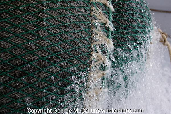 Close up of bulging pelagic trawl net  being hauled onto trawl deck. Barents sea, Arctic Norway