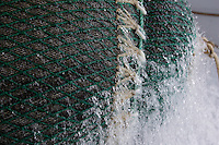 Close up of bulging pelagic trawl net  being hauled onto trawl deck. Barents sea, Arctic Norway