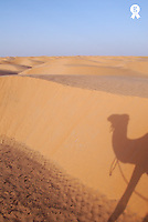 Shadow of camel on sand dune (Licence this image exclusively with Getty: http://www.gettyimages.com/detail/sb10065474du-001 )